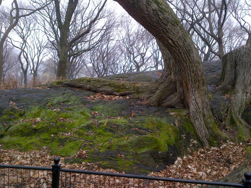 Manhattan-20111221-00034
